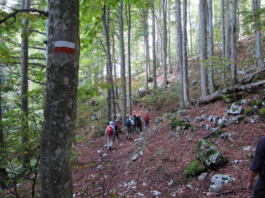 Foresta del cansiglio 2012 gallery gruppo escursionismo for Gruppo forest